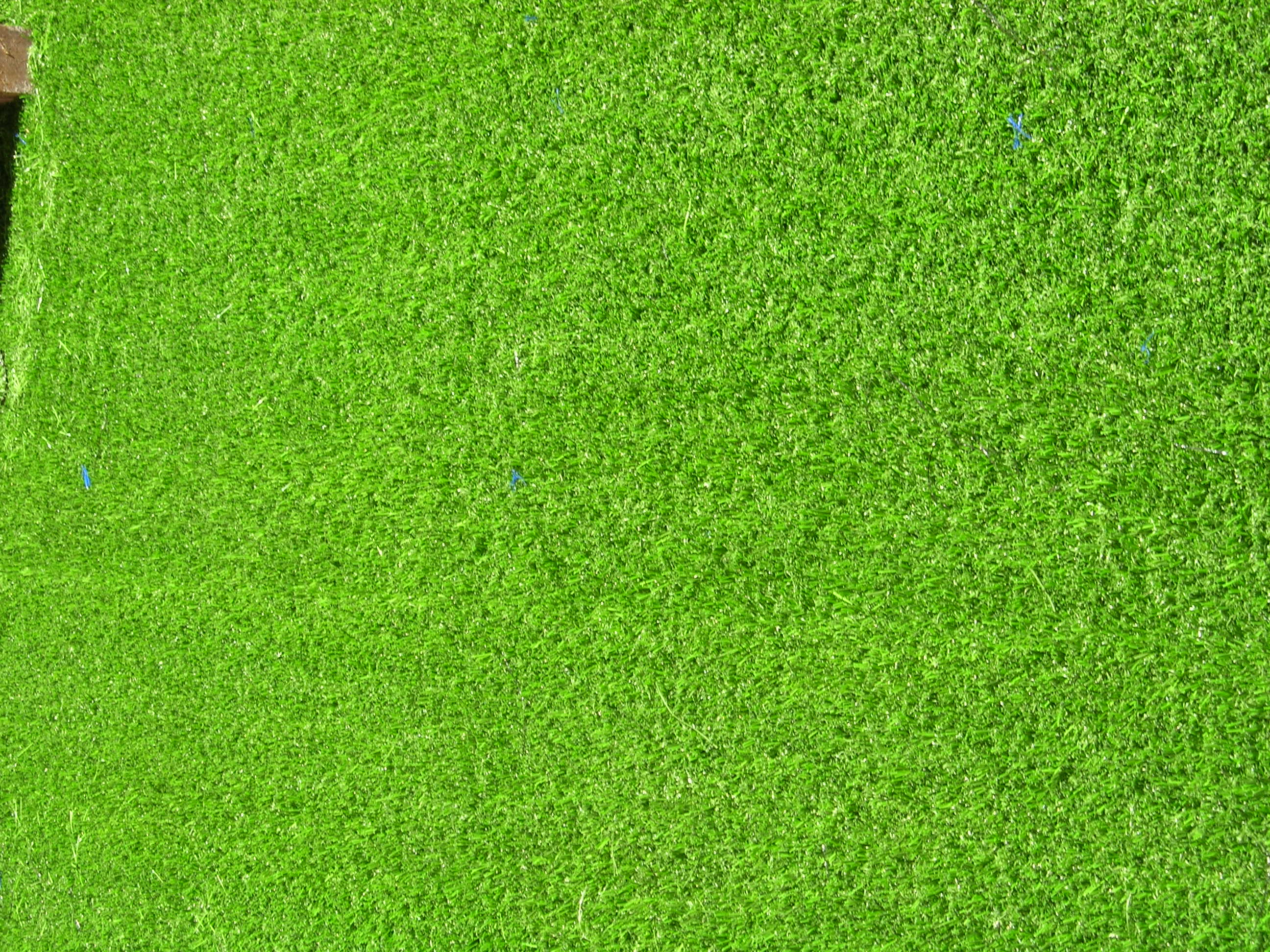 Golf grass top view